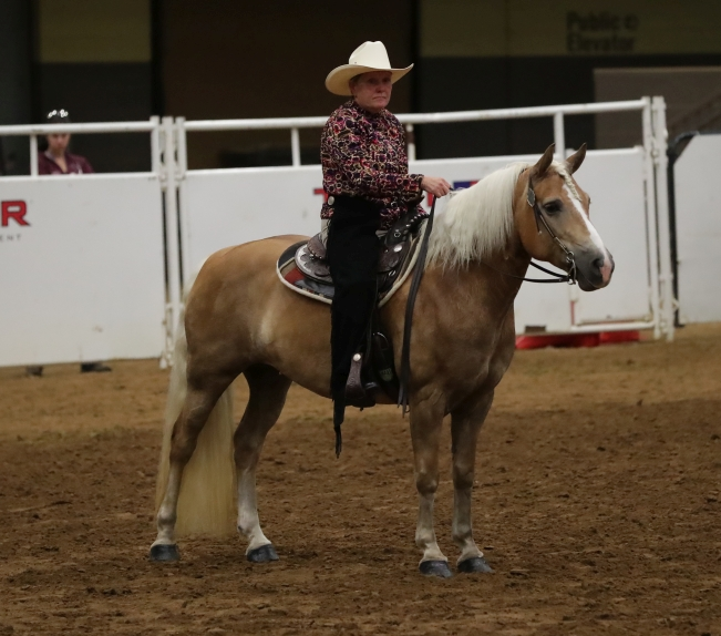 Peggy Brown Haflinger Finals 2018